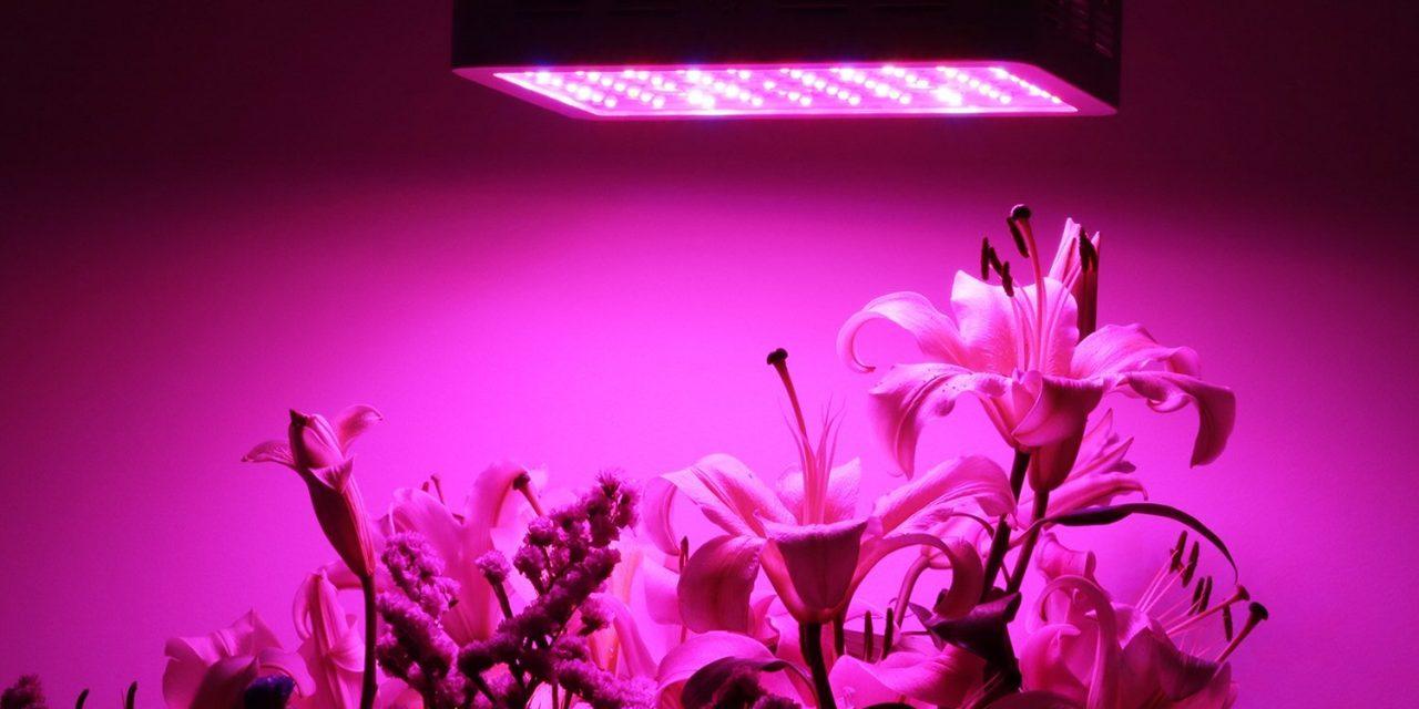 Oświetlenie Roślin I Namioty Uprawowe Kawkowo Polana