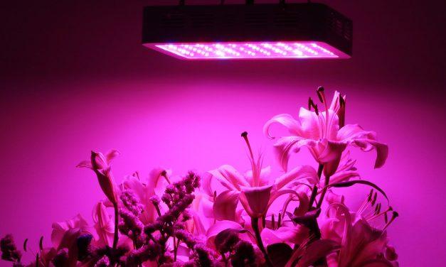Oświetlenie roślin i namioty uprawowe